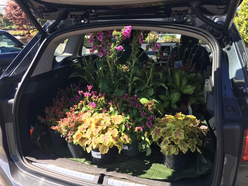 Sourcing, selecting & delivery of plants for small projects
