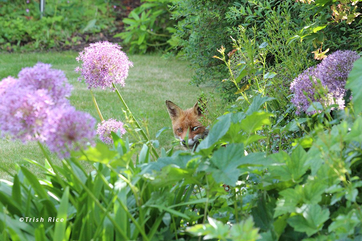 Beautiful Gardening Days of May